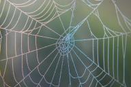 Ein Spinnennetz welches in der Mitte bläulich schimmert.