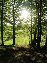 Auf dem Bild sieht man die spät nachmittägliche Sonne in den Hüttener Berge durch Bäume schimmern.
