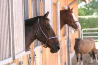 drei Pferde schnuppern Frischluft