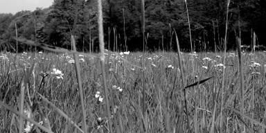Nahaufnahme einer wildwachsenden Wiese, im Hinterg