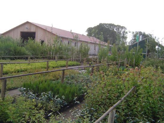 Außenbereich Baumschule