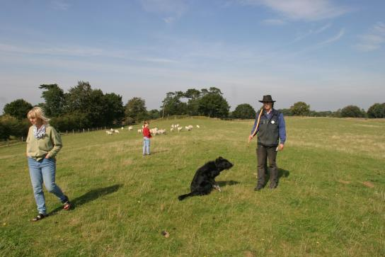 Wiese mit Schafen, Menschen und Hund
