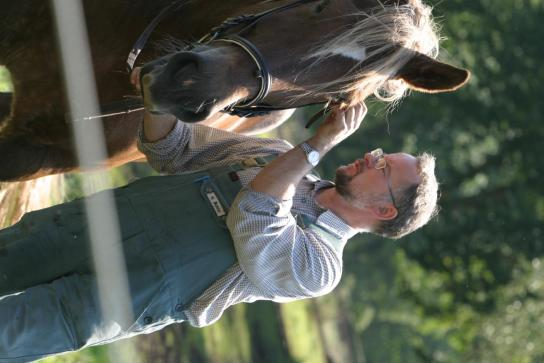 Pferd wird zum Reiten vorbereitet
