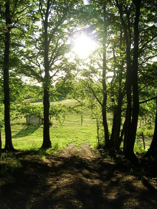 Auf dem Bild sieht man die spät nachmittägliche Sonne in den Hüttener Bergen durch Bäume schimmern.