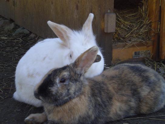 Auch unsere Kaninchen freuen sich in ihrem Gehege auf kleine Besucher.