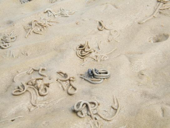 Viele kleine Sandhügel vom Wattwurm gemacht