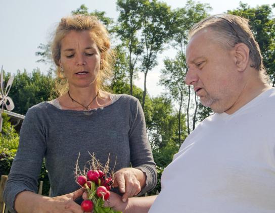 Bild Im Garten werden Radieschen geerntet