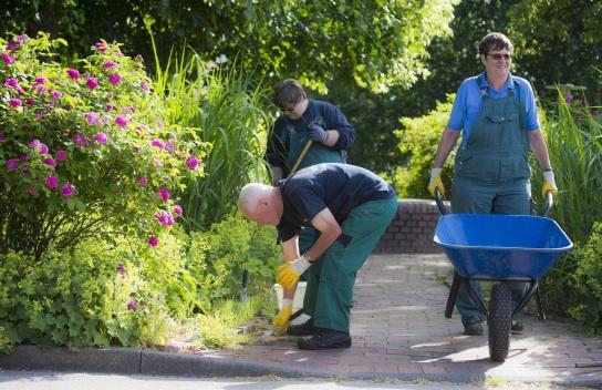 Bild Drei Mitarbeitende des Gartenbaus zupfen Unkr