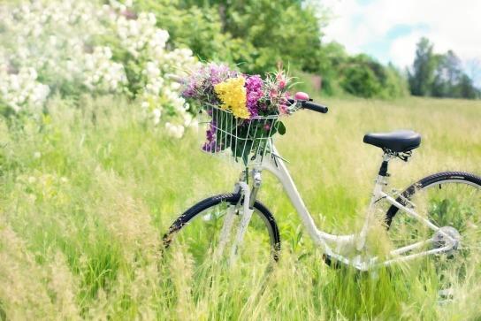Ein Fahrrad steht mit Blumen dekoriert auf einer grünen Wiese.