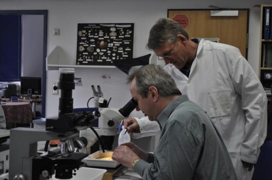 Arbeit im Labor für Meeresbiologie