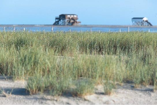 Im Hintergrund steht ein Haus auf Pfählen am Strand