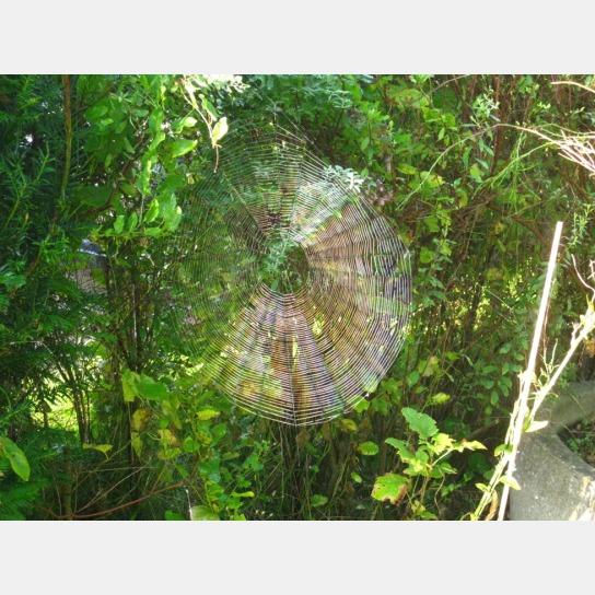 Man sieht ein in der Sonne glänzendes Spinnennetz