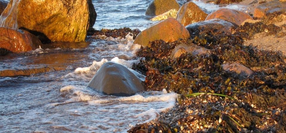 Steineformationen am Strand in Schleswig-Holstein