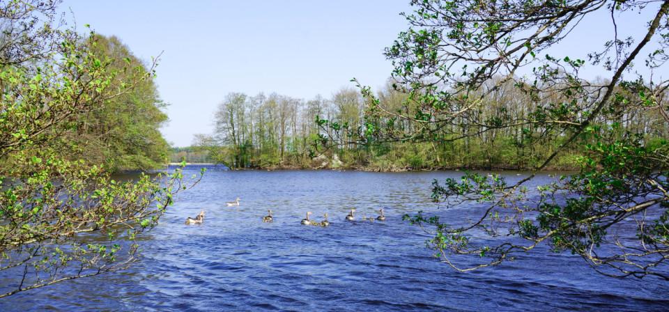Ein See im schönen Schleswig-Holstein