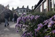 Im Vordergrund blühende Blumen, im Hintergrund ve