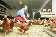 Mitarbeiter füttern die Bio-Hühner mit Weizenkö