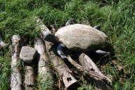 Sie sehen eine Schildkröte, deren Panzer aus eine