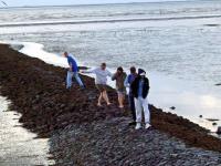 Gemeinsam das Spiel der Gezeiten erleben - Mitglieder der DASI-WG Undine an der Nordsee