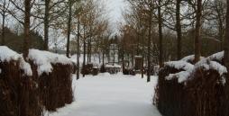 Die Baumkirche ist von einer weißen Schneedecke bedeckt.
