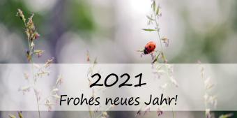 Das Bild zeigt einen Marienkäfer, der auf einer B