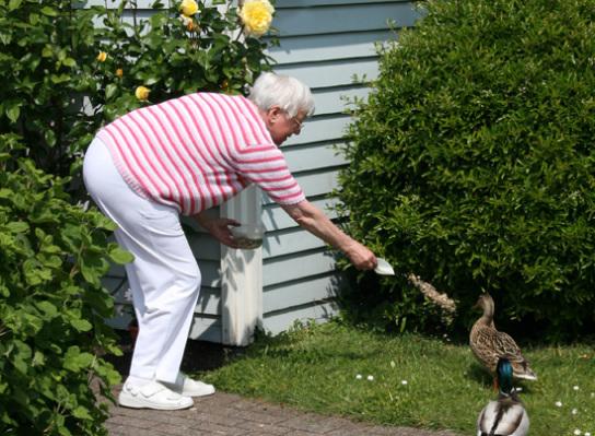 Mieterrin füttert Ente