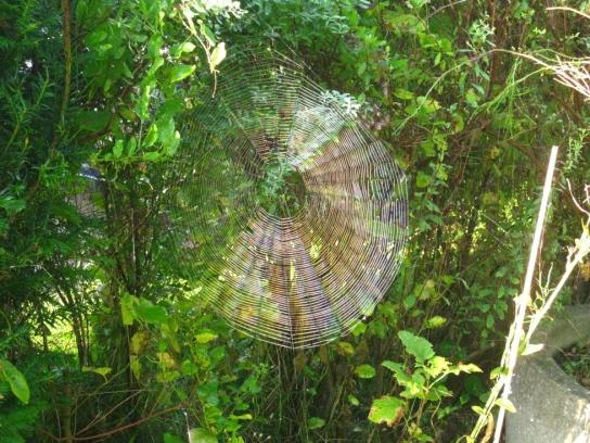 Man sieht ein in der Sonne glänzendes Spinnennetz .