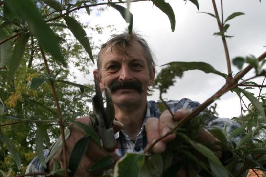 Heckenschnitt durch einen Mitarbeiter der Garten- und Landschaftpflege