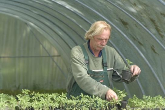 Arbeit und Qualifizierung im Bereich Gartenbau