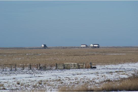 Pfahlbauten  einsam stehen sie im Schnee