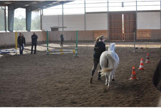Ein Mädchen führt ein Pony durch das Slalom.