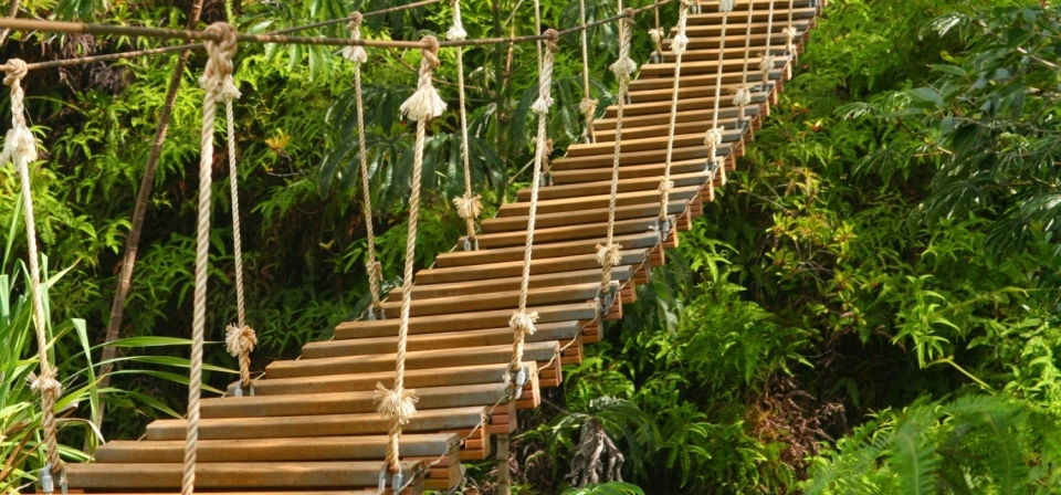 Eine Holzbrücke im Grünen