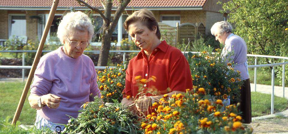 Drei Frauen machen Gartenarbeit