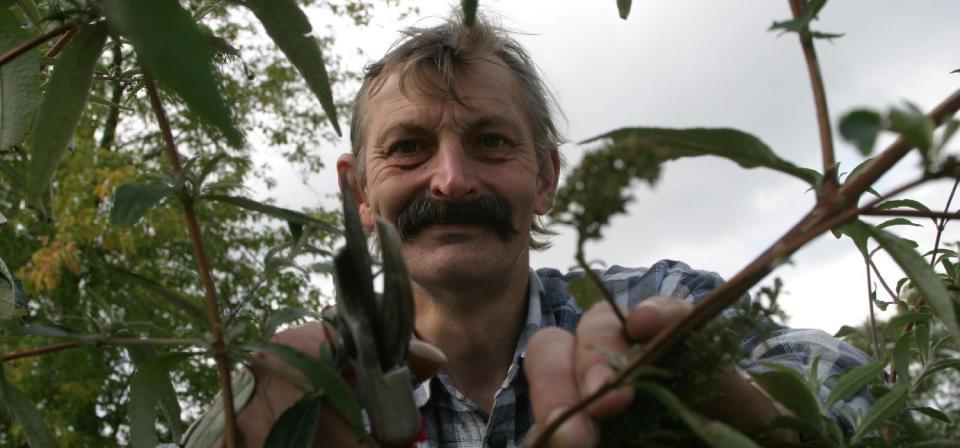 Heckenschnitt durch einen Mitarbeiter der Garten-